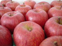 健康を効率よく考えると、「一日一個のりんご」